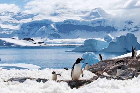 An Antarctica Vacation is the Adventure of a Lifetime